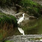 Egret at Coyote Hills, wide view in the marsh on a rainy day by OPTATIVE