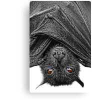 Be Afraid...I Eat Fruits & Lick Nectars! Canvas Print