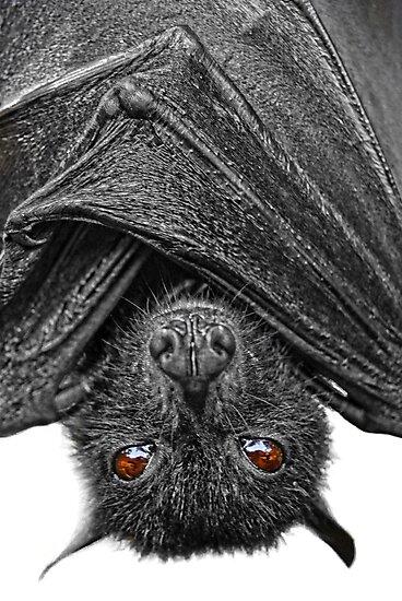 Be Afraid...I Eat Fruits & Lick Nectars! by Yhun Suarez