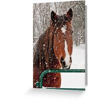 Horse In Snow Storm Greeting Card