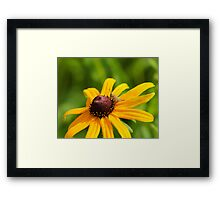 Grasshopper and Black Eyed Susan Framed Print