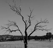 The Dead Tree by AlexKokas