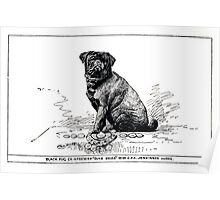 All about dogs a book for doggy people Charles Henry Lane 1900 0271 Black Pug_jpg Poster