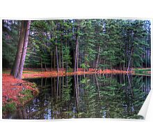 Evergreen Reflections Poster