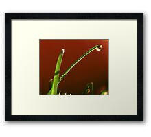 Grass in  front of tomato. Framed Print