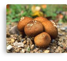 Fuzzy round things! I guess. Canvas Print
