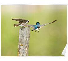 Swallow Love Talk Poster