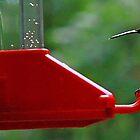 Ruby-Throated Hummingbird @ The Feeder by T.J. Martin