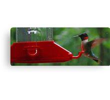 Ruby-Throated Hummingbird @ The Feeder Canvas Print