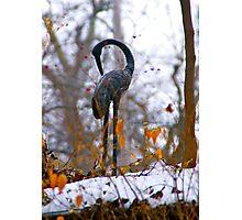 The Crane Photographic Print