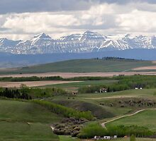Spring in the Alberta Foothills  by Judy Grant