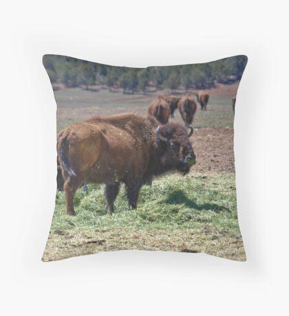 Bison de Escalante Throw Pillow