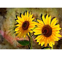 Double Sunshine Photographic Print