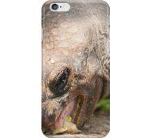 turtle eating iPhone Case/Skin