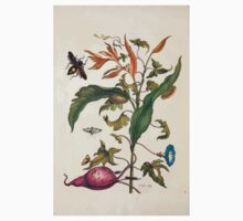 Metamorphosis insectorum surinamensium Maria Sibylla Merian 1705 0132 Insects of Surinam_jpg Kids Tee