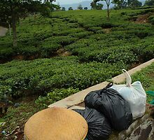 tea plantation by bayu harsa