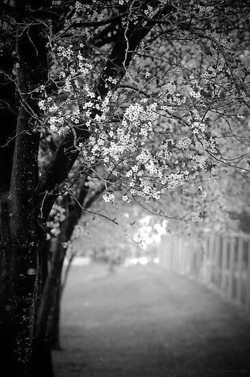 Blossoms of Spring by Annie Lemay  Photography