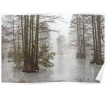 Frozen Cypress Swamp in Fog Poster