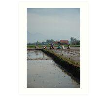 rice paddies Art Print
