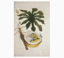 Metamorphosis insectorum surinamensium Maria Sibylla Merian 1705 0129 Insects of Surinam_jpg One Piece - Short Sleeve