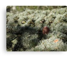 In the woods - Fir Tree Canvas Print