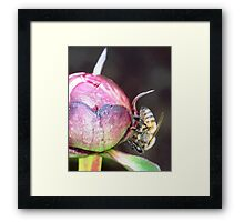 WHERE IS THE POLLEN? Framed Print