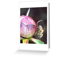 WHERE IS THE POLLEN? Greeting Card