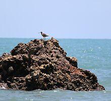 Cape Hillsborough Bird by AlexKokas