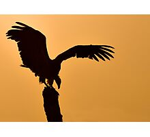 Vulture at Dawn - Samburu Kenya Photographic Print