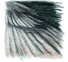 Grey Green Feathers - detail of a cormorants wing by Ellen  Howell