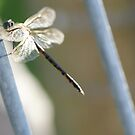 Dragonfly by Belinda Fletcher