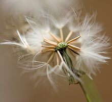 Seed Head  by Jenny Dean