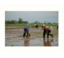 planting paddies Art Print