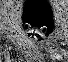 Peekaboo! by Tanya Keefe