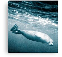 Seal Below the Surf Canvas Print