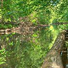 Pascack Brook by Lauren Banks