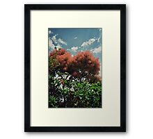 Cotton candy plant Framed Print