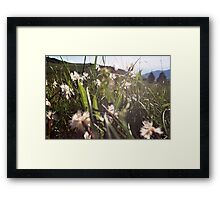 Fringed pinks Framed Print
