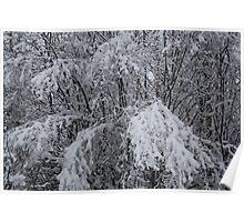 Snowy Tree Limbs Poster