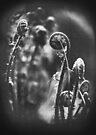 twists of distortia by Purplecactus