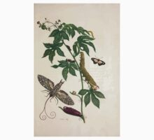 Metamorphosis insectorum surinamensium Maria Sibylla Merian 1705 0123 Insects of Surinam_jpg One Piece - Long Sleeve