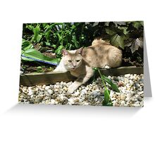 Talking to the animals. Greeting Card