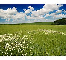 Green fields of summer - XIII by DimensionSeven