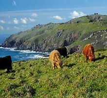 Cornish Highlanders by rodsfotos