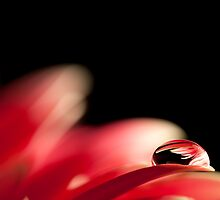 Topsy-turvy water drop by Diego Baroni