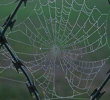 Web by awefaul