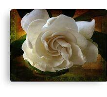 ~ Gardenia ~ Canvas Print