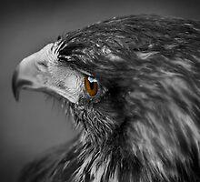 Hawk Eye 2 by Jonathan Fletcher