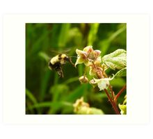 Bee in the Raspberries Art Print