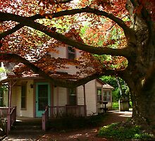 Old house, old tree by tanmari